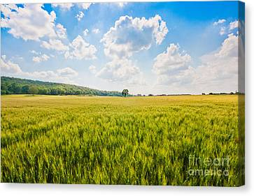 Cornfield In Tuscany Canvas Print by JR Photography