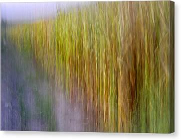 Cornfields. Memories Of Van Gogh.... Canvas Print
