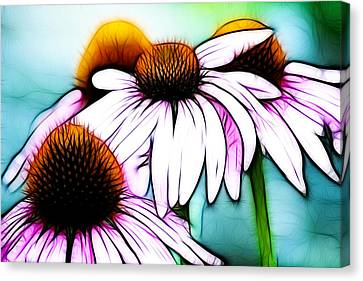 Aqua And The Coneflowers Canvas Print by Sherry Wyne