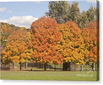 Corning Fall Foliage 1 Canvas Print
