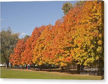 Corning Fall Foliage 3 Canvas Print