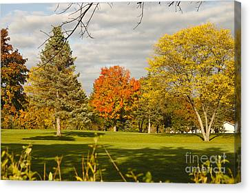 Corning Fall Foliage 5 Canvas Print by Tom Doud