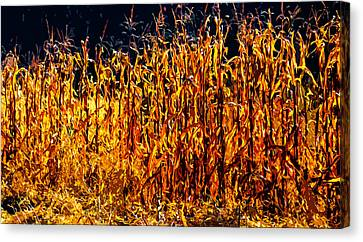 Cornfield Canvas Print - Cornrow 2 by Brian Stevens