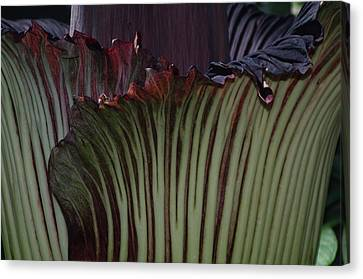 Canvas Print featuring the photograph Corpse Flower Detail 1 by Sheila Byers