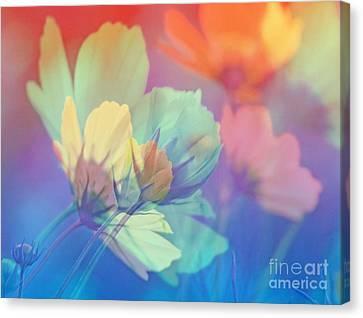 Cosmea Bella Flower Canvas Print by Die Farbenfluesterin