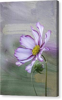 Cosmo Of The Garden Canvas Print by Kristal Kraft