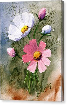 Cosmos Blooms Canvas Print by Jo Appleby
