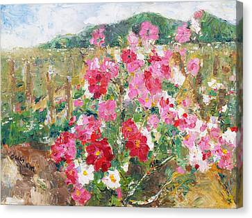 Cosmos In The Field Canvas Print by Becky Kim