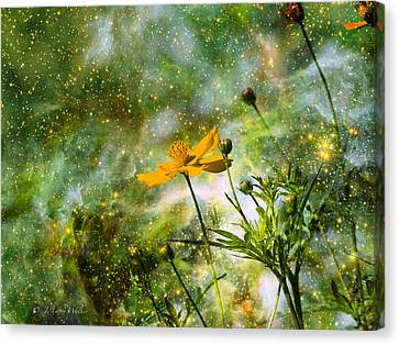 Cosmos Sharing It's Beauty Canvas Print by J Larry Walker