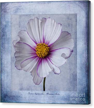 Flora Canvas Print - Cosmos With Textures by John Edwards