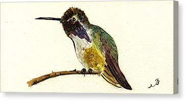 Costa S Hummingbird Canvas Print by Juan  Bosco
