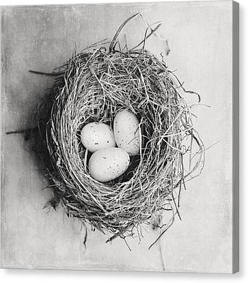 Cottage Bird's Nest In Black And White Canvas Print by Lisa Russo