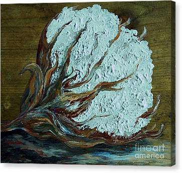 Cotton Boll On Wood Canvas Print by Eloise Schneider