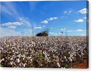 Canvas Print featuring the photograph Cotton Field Under Cotton Clouds by Andy Lawless