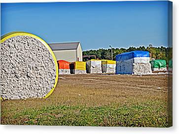 Cotton Harvest Canvas Print by Linda Brown