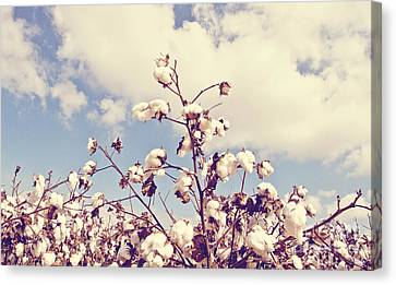 Cotton In The Sky Canvas Print by Scott Pellegrin