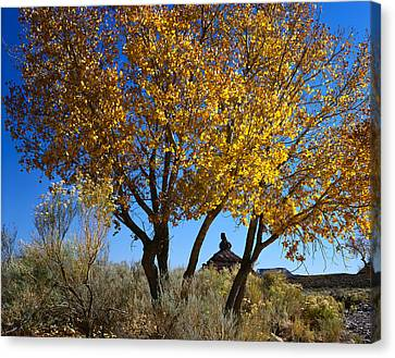 Cottonwood And Nipple Butte Canvas Print
