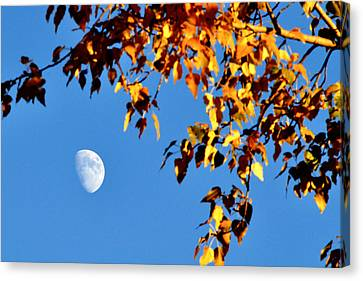 Cottonwood Moon Canvas Print by Jan Davies