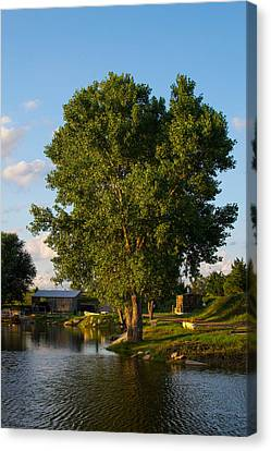 Cottonwood Canvas Print