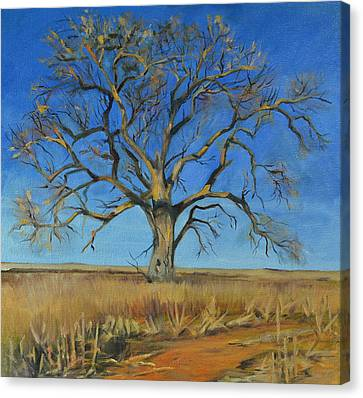 Cottonwood On The North 40 Canvas Print by Pattie Wall