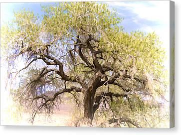 Cottonwood Tree Digital Painting Canvas Print by Dianne Phelps