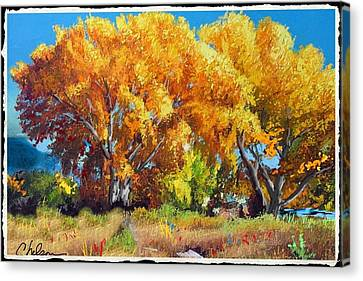 Cottonwoods Along The Colorado Canvas Print by Craig Nelson
