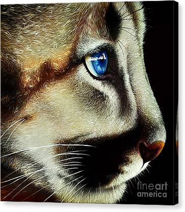 Cougar Cub Canvas Print by Jurek Zamoyski