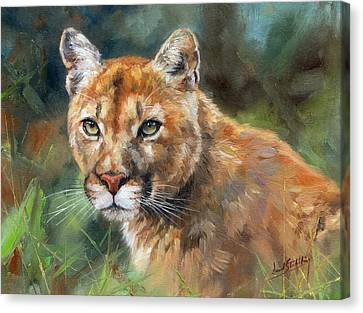 Cougar Canvas Print by David Stribbling