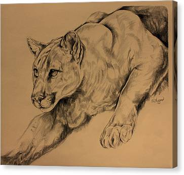 Cougar Canvas Print by Derrick Higgins
