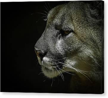 Cougar Canvas Print by Ernie Echols