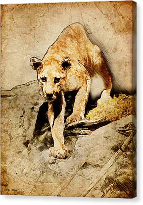 Cougar Hunting Canvas Print by Ray Downing