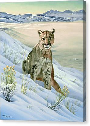'cougar In Snow' Canvas Print