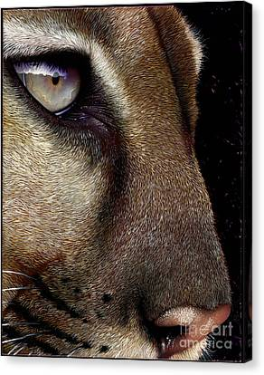 Mountain Lion Canvas Print - Cougar by Jurek Zamoyski