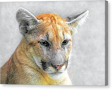Cougar Canvas Print by Marion Johnson