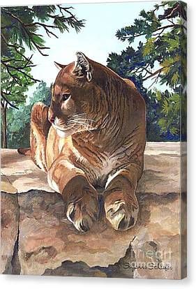 Cougar Outlook Canvas Print