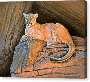 Canyon Country Canvas Print - Cougar by Paul Krapf