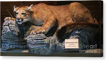 Fake taxidermy america