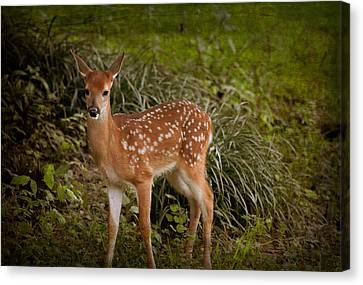 Could It Be Bambi Canvas Print