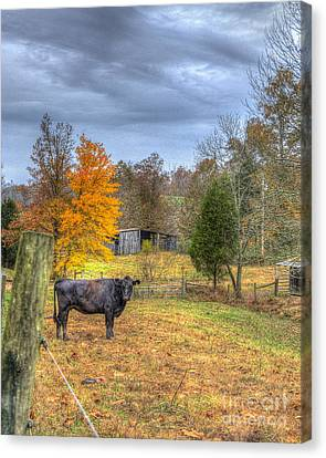 Hdr Landscape Canvas Print - Country Cow In Autumns Beauty by Sherri Duncan