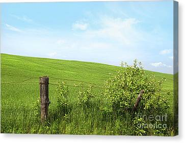 Country Fence With Flowers With Blue Sky Canvas Print by Sandra Cunningham