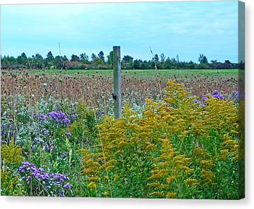 Country Field Canvas Print by Heather Allen