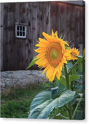 Country Flower Canvas Print by Bill Wakeley
