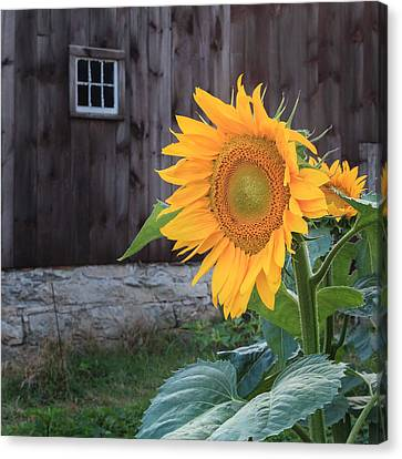 Country Flower Square Canvas Print by Bill Wakeley