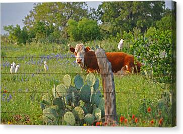 Country Friends Canvas Print