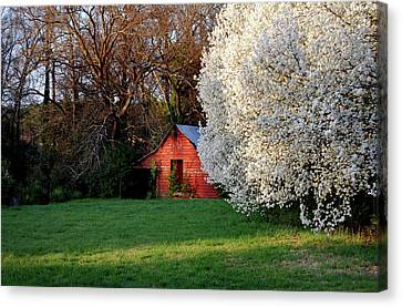 Country Gem Canvas Print by Skip Willits