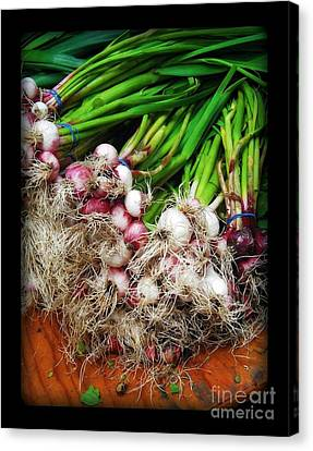 Country Kitchen - Onions Canvas Print by Miriam Danar