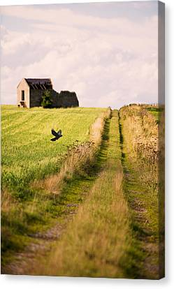 Country Lane Canvas Print by Amanda Elwell