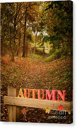 Country Lane In Autumn Canvas Print by Amanda Elwell