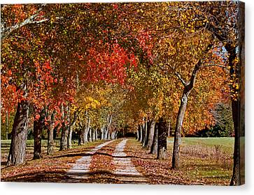 Canvas Print featuring the photograph Country Lane In Autumn by Jerry Gammon