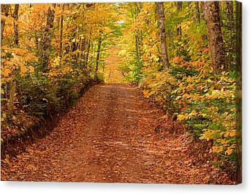 Country Lane In Autumn Canvas Print by Matt Dobson